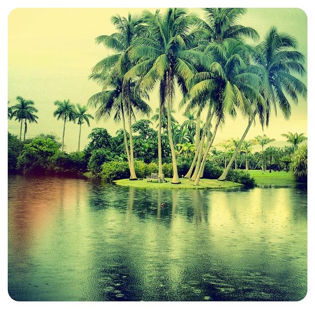 1000 Images About Fairchild Gardens Miami Florida On