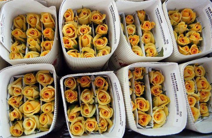 El sector floricultor genera unos 20.000 empleos en Guatemala, de los que el 80 % son mujeres del área rural. EFE/Archivo<br/>