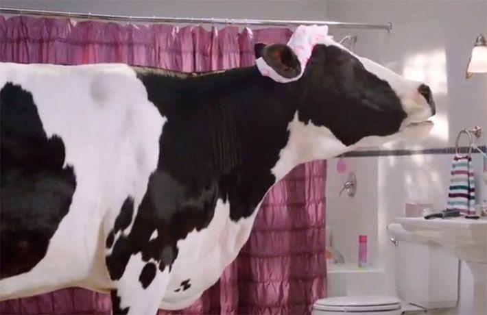 great way cow singing in bathroom commercial bathroom