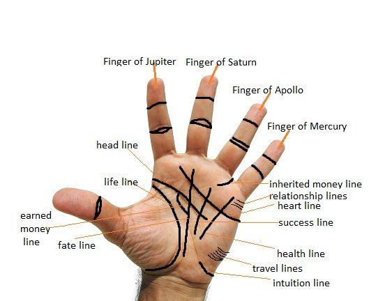 How to read palms, easy steps...