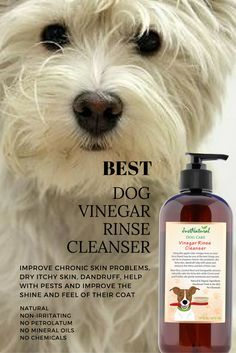 Using this apple cider vinegar rinse on your furry friend may be one of the best things you can do to improve chronic skin problems, dry itchy skin, dandruff, help with pests and improve the shine and feel of their coat.