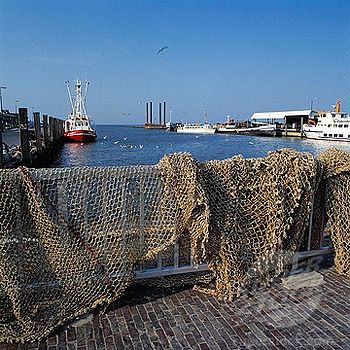 east coast fishery essays Stocks continued to decline, and in 1992 a moratorium was declared on canada's east coast cod fishery surprisingly, perhaps.