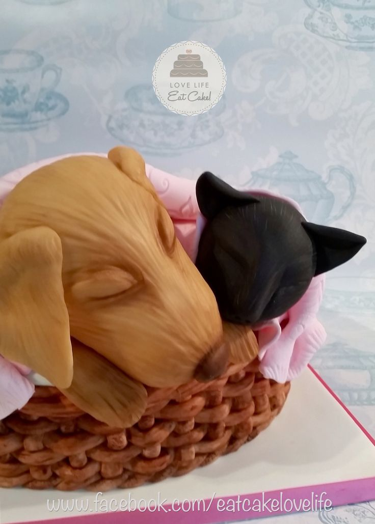 Best Birthday Cakes Images On Pinterest Birthday Cakes Eat - This cat eating a birthday cake is everything you need in life
