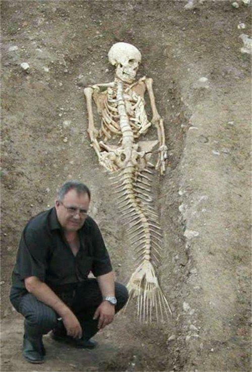 Homem afirma ter encontrado esqueleto de sereia | Curto e Curioso
