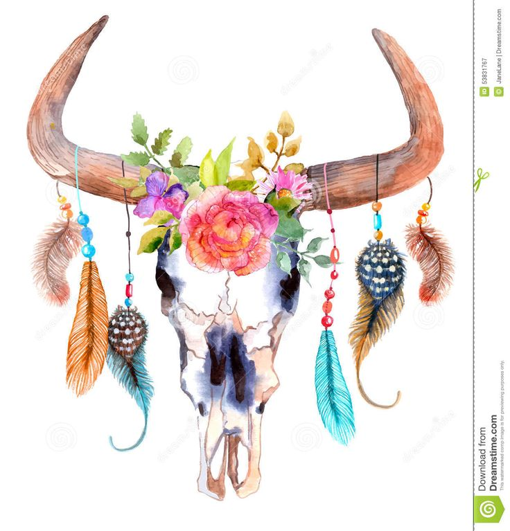 watercolor-bull-skull-flowers-feathers-over-white-53831767.jpg (1247×1300)