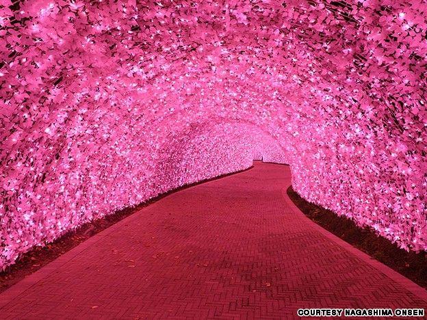 Japan's Nabana no Sato botanical park's annual winter light show features a 100-meter-long Cherry Kawazu tunnel.