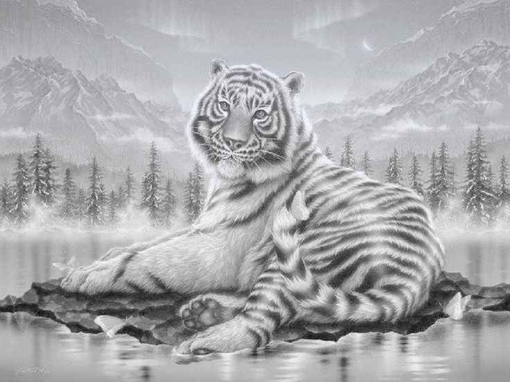 106 best Coloring Tigers images on Pinterest | Big cats, Cats and ...