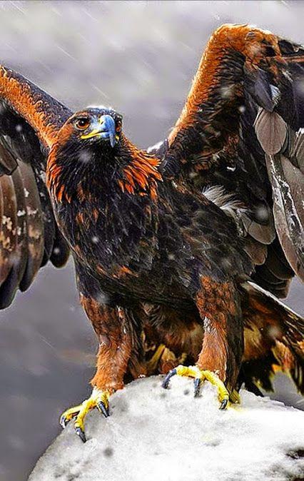 What a magnificent bird!