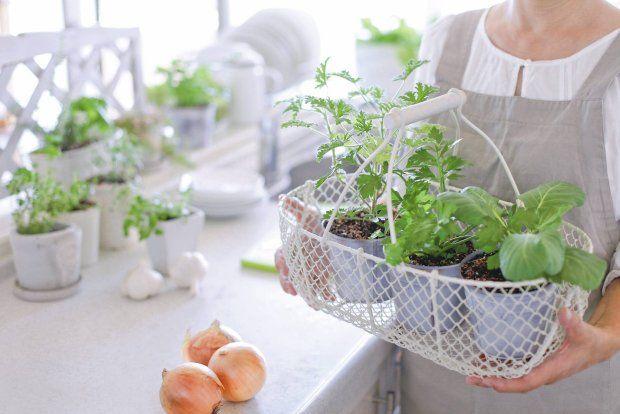 Doniczki warto co pewien czas obracać, żeby rośliny miały równomierny dostęp do światła.