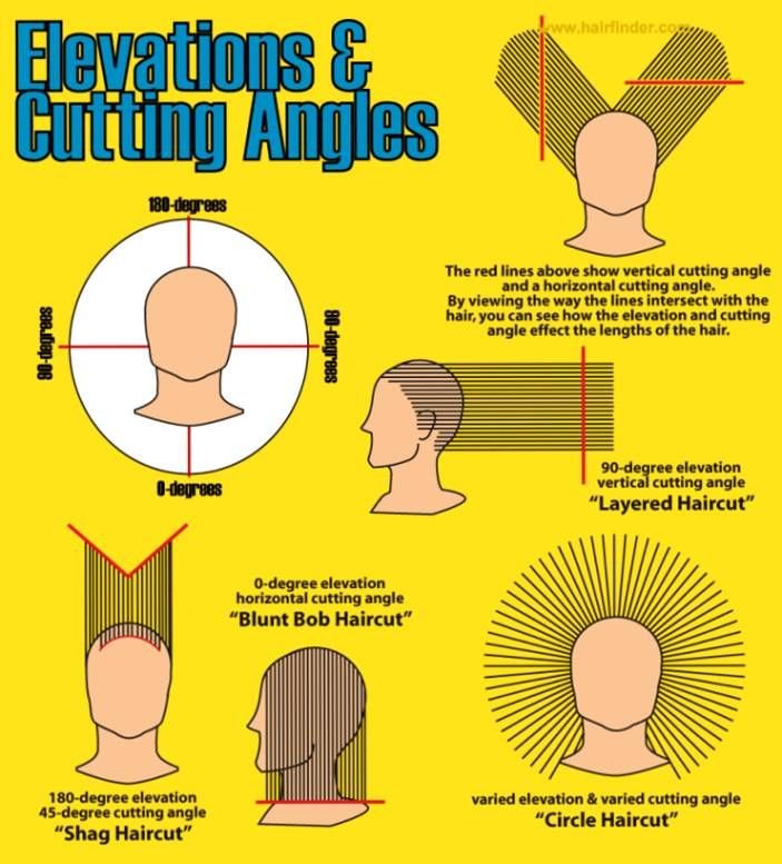 Diagram Of Head For Showing Haircuts Google Search Haircuts