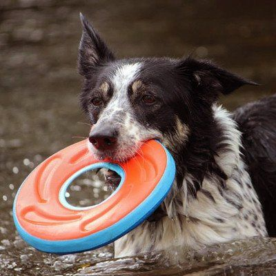 d879817a709299c266c93196b7a0ea01 frisbee medium 74 best dog toys images on pinterest dog toys, pet supplies and