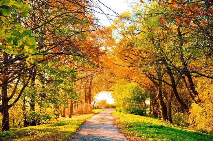Осень, прекрасный вид, пейзаж, пейзаж, дорога, деревья, осень, природа, деревья, осень, листва вектор