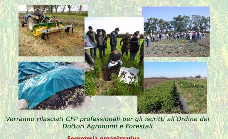 Metaponto (Matera) - Agro-ecologia e innovazione della gestione agronomica in agricoltura biologica