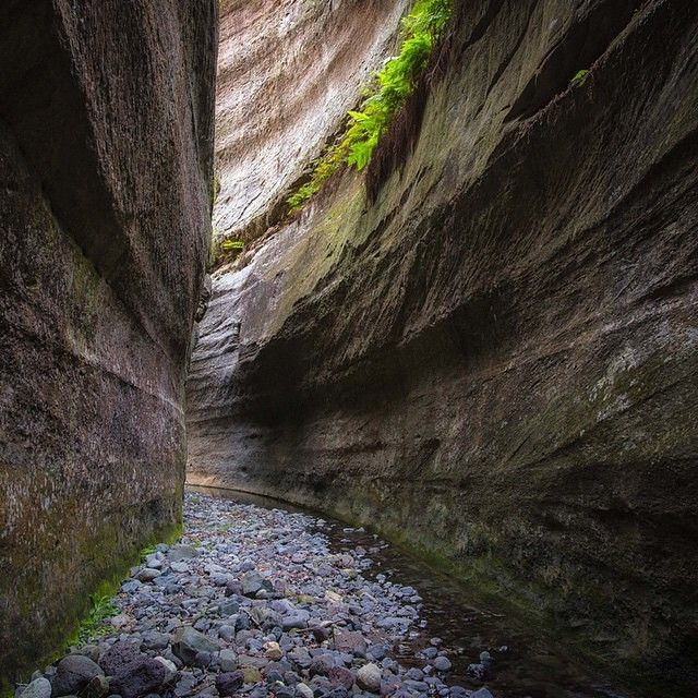 Exploring the Sandstone Wilderness that is Carnarvon Gorge. #thisisqueensland by @nathanwhiteimages near @visitcapricorn #visitcapricorn #southerngreatbarrierreef #seeaustralia