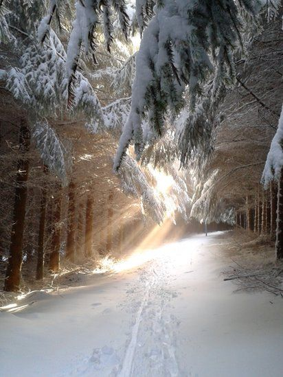 Sunlight streaming through trees at Glentress.  by Madeleine Kirk