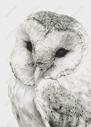 barn owl are so pretty