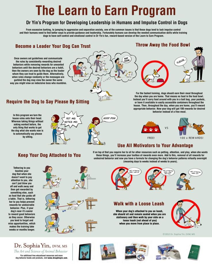 The Learn To Earn Program For Dog Training