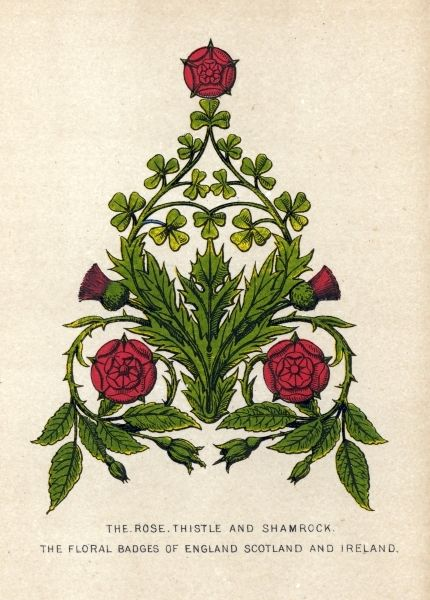 Stumped by Shamrocks, streets of salem, The Rose, Thistle and Shamrock. The floral badges of England, Scotland and Ireland.