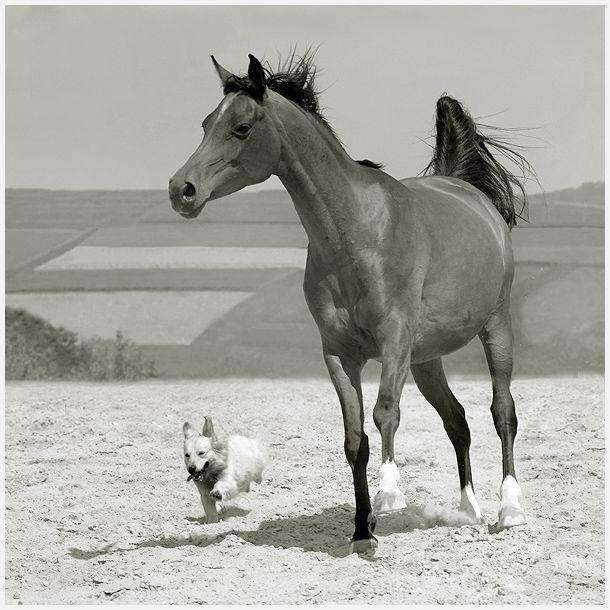 Zdjęcia - Galeria fotografii - Fotografia cyfrowa i analogowa - Widok zdjęcia