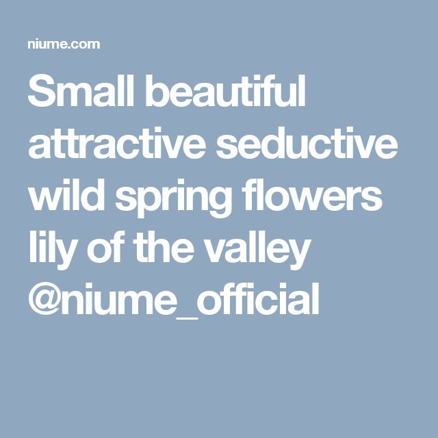 Small beautiful attractive seductive wild spring flowers lily of the valley @niume_official