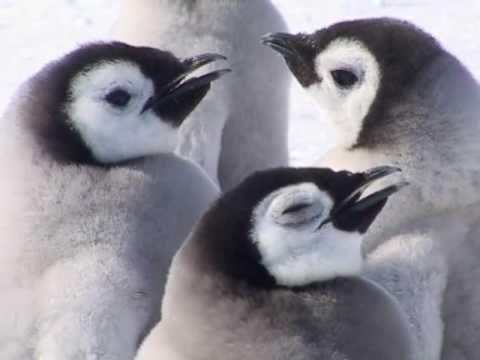 Antarctique libre : Vive l'empereur !  (Part I)