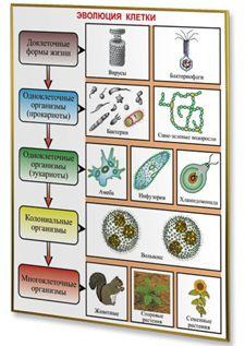 Плакаты по биологии