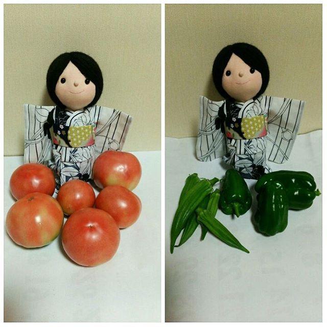 先生のお家で採れた夏野菜!ツヤツヤしてて、どれもおいしそー😋  #夏野菜 #トマト #ピーマン #オクラ #東亜和裁 #toawasai