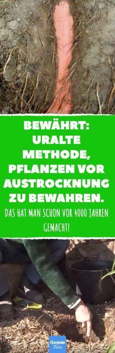 Bewährt: uralte Methode, Pflanzen vor Austrocknung zu bewahren. #garten #sommer… Silvia Hoffmann