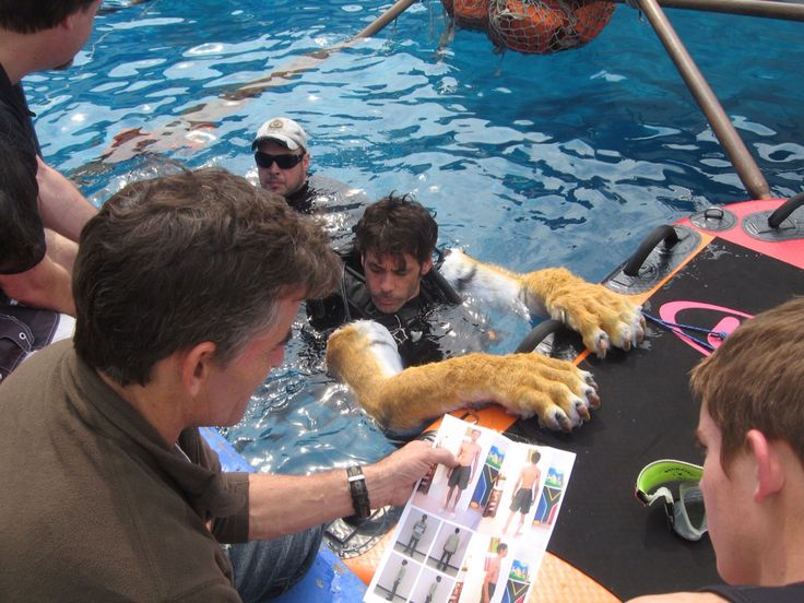 Behind the scenes life of pi movie set behind the for Life of pi pool scene
