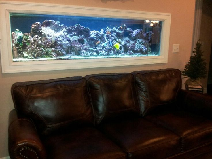 17 best images about fishtanks on pinterest saltwater for Fish tank built into wall