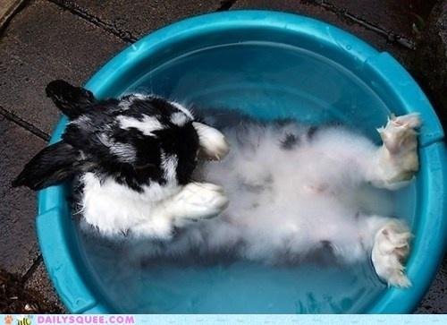 Bunday: Bath TimeBunnies Bath, Funny Bunnies, Spa Day, Easter Bunnies, Bathtime, Bubbles Bath, Beautiful Creatures, Animal, Bath Time