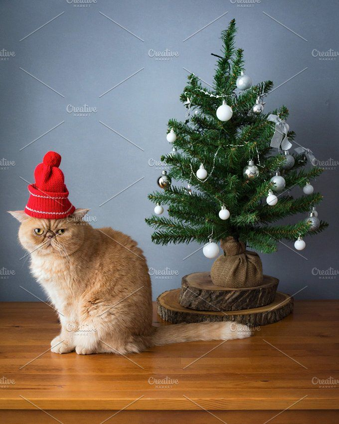 Christmas cat by The baking man on @creativemarket