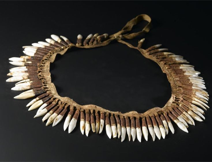 Australia | Necklace or head ornament from the Aboriginal people of Victoria | ca. 1850 - 1860 || Kangaroo incisor ornament of eighty eight kangaroo teeth suspended from a strip of dressed kangaroo skin by loops
