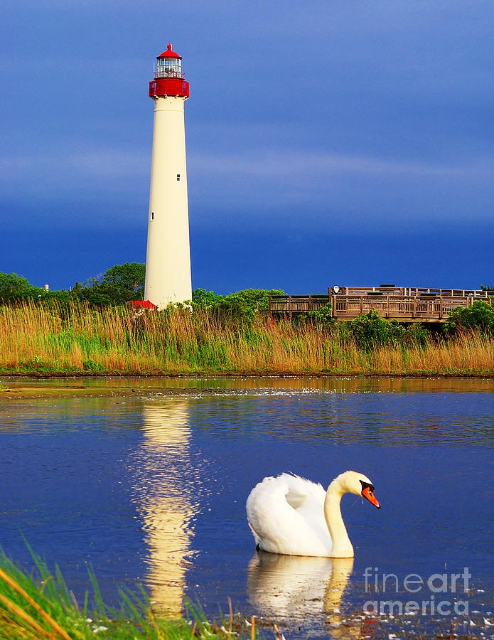 Swan at the Cape May Lighthouse Fine Art Print