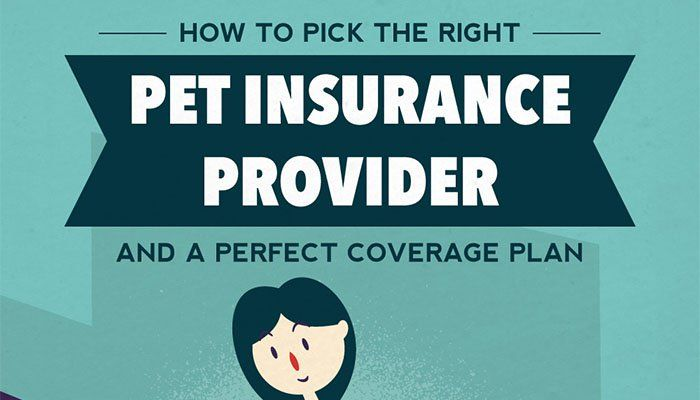 Infographic 19 Tips To Help You Pick The Best Pet Insurance Plan