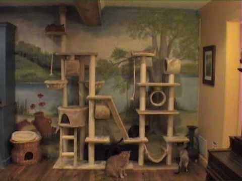 101 Best Ideas For Cat Habitat And All Things Cat Images