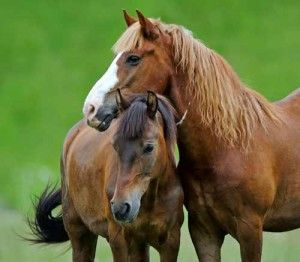 Acupressure is safe, non-invasive, always available, and has proven to be rather effective with colic.