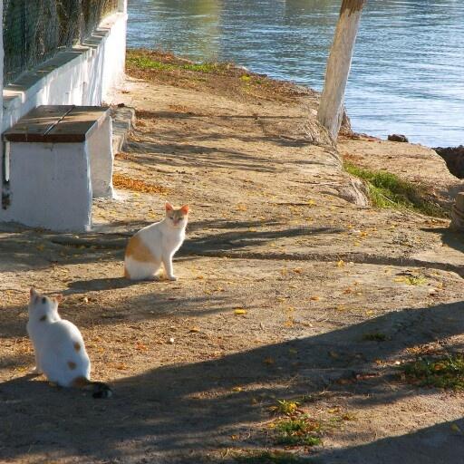 Glyfa, Fthiotida. Greece. Winter 2008.