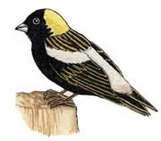 bird life cycle worksheet