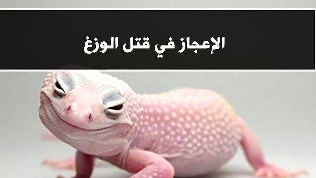 لماذا أمرنا النبي صلى الله عليه وسلم بقتل أبو بريص الوزغ ولماذا يحرك ذيله بعد قطعه Animals Lizard