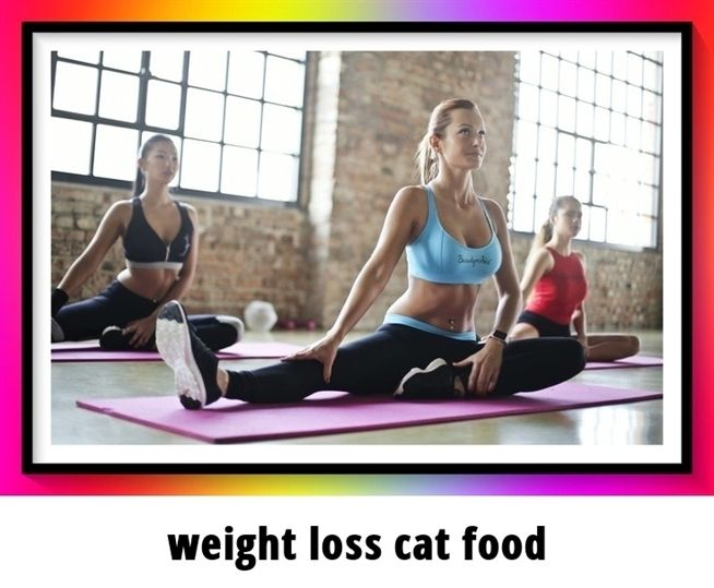weight loss cat food