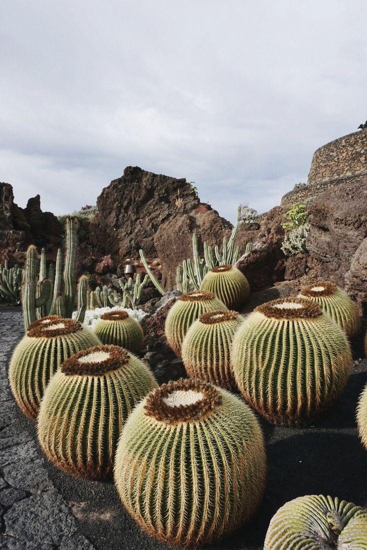Cactus garden, Lanzarote. By @mirenalos