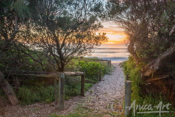 Golden sunrise through Mollymook Beach Reserve - Golden sunrise through Mollymook Beach Reserve