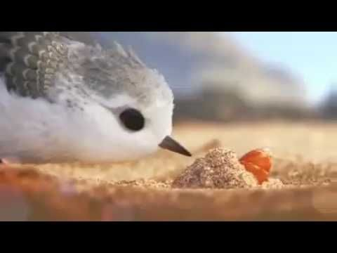 Perfect for Growth Mindset!! Watch a Bird Overcome Fear in Pixar's Heart-Melting New Short Film Piper - YouTube