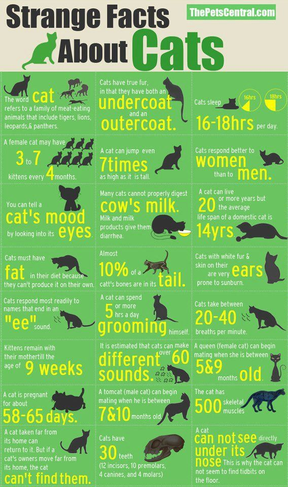 Strange Facts About Cats | all about our pets