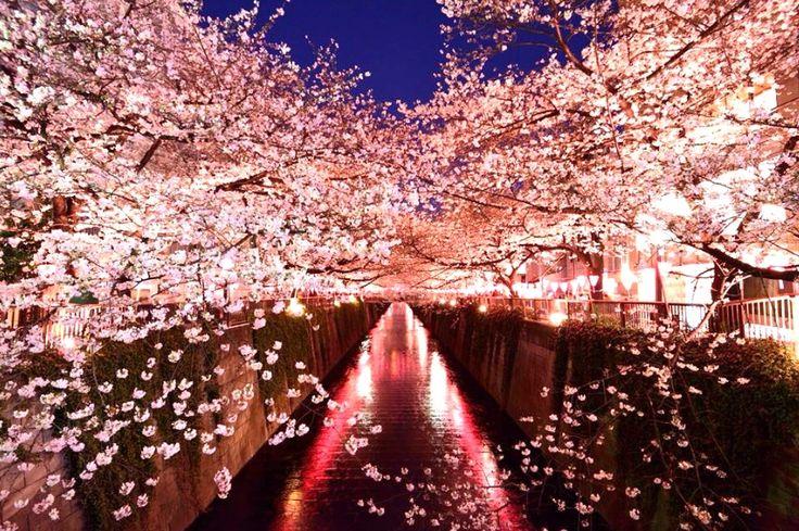 【2017年版】関東では多くの桜の名所で3月下旬〜から開花時期を迎え、ついに待ちに待ったお花見シーズンが到来します。今回はウォーカープラスさんの「関東の人気お花見スポットランキング」より、関東で人気の高い桜の名所を10位からご紹介いたします。上位にランクインしたのは誰もが納得のあの場所でした!