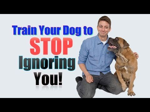 Separation Anxiety: Does your dog go crazy when you leave? Here's what to do! - YouTube