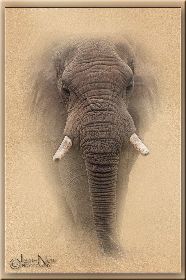 The Elephant: Grunge Effect