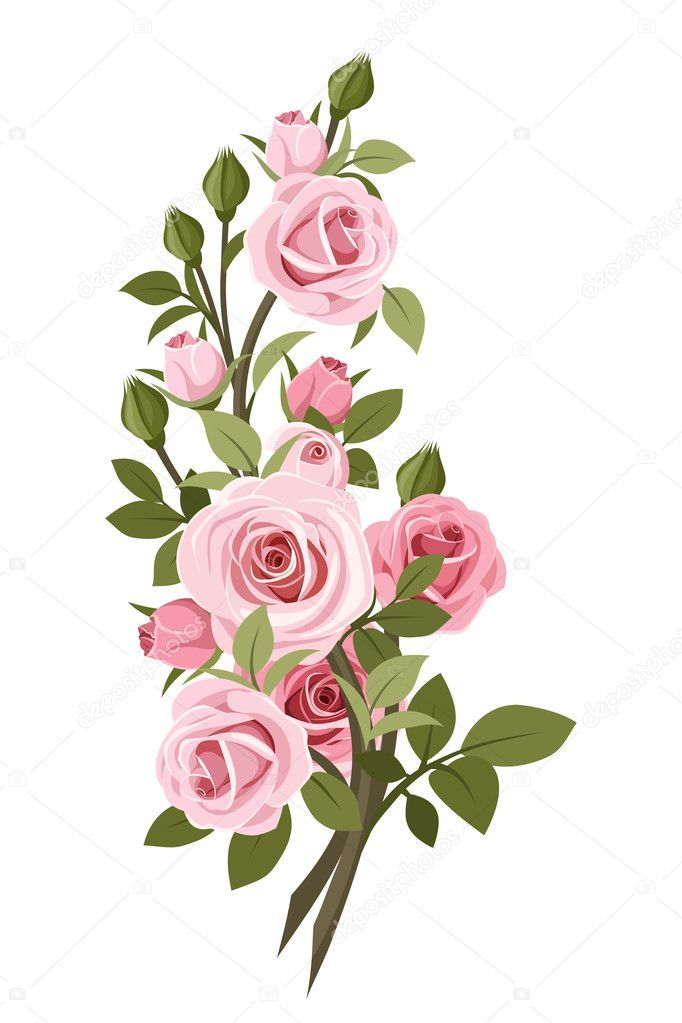 Branch With Pink Roses Rose Buds And Leaves Isolated On A White