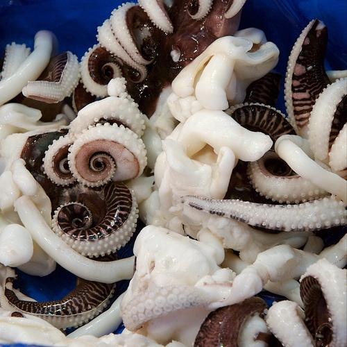 tentacles: Tentacle Bluedivag, Octopuses Limb, Thepartygoddess Com Tentacle, Tentacle Bonanza, Posts, Majcher Thepartygoddess Com, Pictures, Octopuss Limb, Parties Goddesses